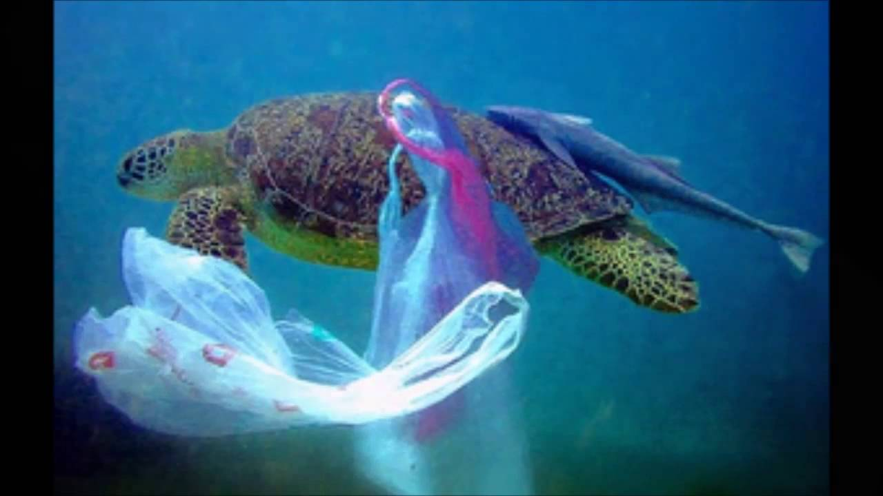 should plastic be banned In my opinion, the use of plastic bags should be banned completely the main concern is the fact that these plastic bags are not biodegradable, hence causing a significant impact on our.