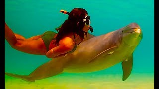 Battle Strong Weak In The Water Girl And A Dolphin, Sea Killer Whale, Shark, Beluga -10 Viral Videos
