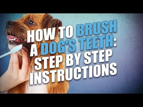 How to Brush A Dog's Teeth (Scared and Anxious Dogs)