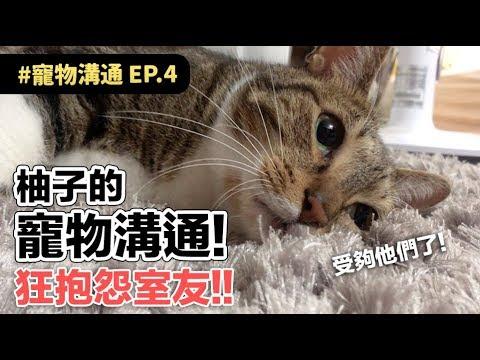 【柚子的寵物溝通!狂抱怨室友!!】志銘與狸貓