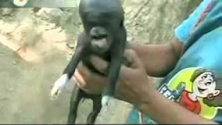 amazing unbelievable footage piglet born with a human head in Guatemala!!WTF!!I Its a little alien