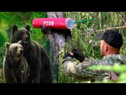 Вопрос: В лесу около деревни подняли медведя, что делать?