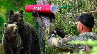 Поехали в лес, прогнали медведя петардой 💣