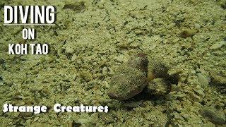 Night Scuba Diving on Koh Tao Island - Strange Creatures