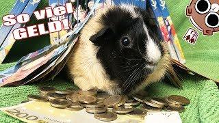 😱 MASSIVE Geld Spenden für hungrige Meerschweinchen 😱 OMG! - 💚DANKE💚 | Die Meeries