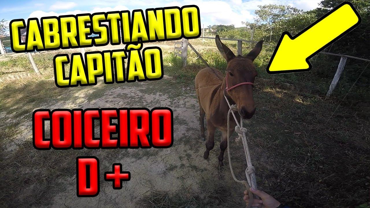 CABRESTIANDO O CAPITÃO