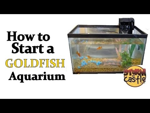 How To Start A Goldfish Aquarium