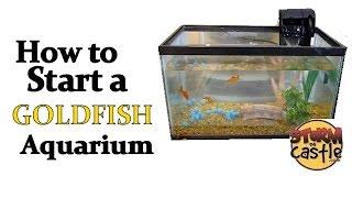 How to start a goldfish aquarium