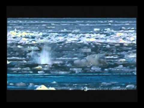 Iceberg Project with National Geographic