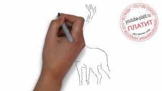 Как нарисовать рогатого оленя за 36 секунд
