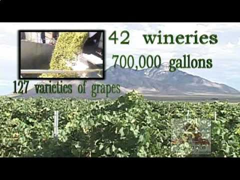 NM Wine Economy