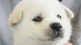 http://passerellewan.jp/puppies/?type=6.