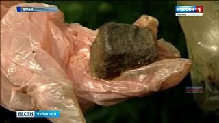 В Чувашии проведут профилактическую иммунизацию диких животных от бешенства