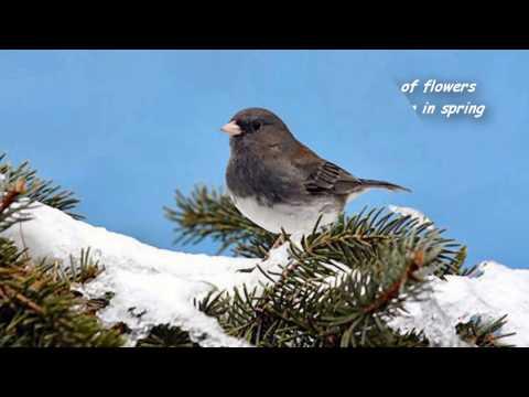 Snowbird - Lyrics - Anne Murray