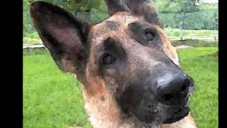 German Shepherd Rescue Alliance Of Wi-about Us!