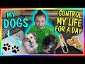 DOGS CONTROL ME FOR A DAY!🐶 | We Are The Davises