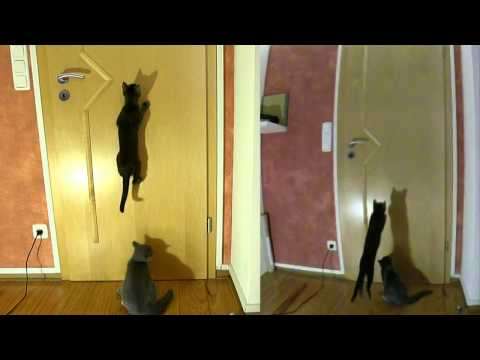 Gin-chan and Scotty - cats jumping in slow motion