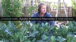 Vegetable Gardening: How to Grow Broccoli