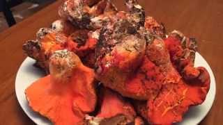 Oregon Coast Lobster Mushrooms 2015