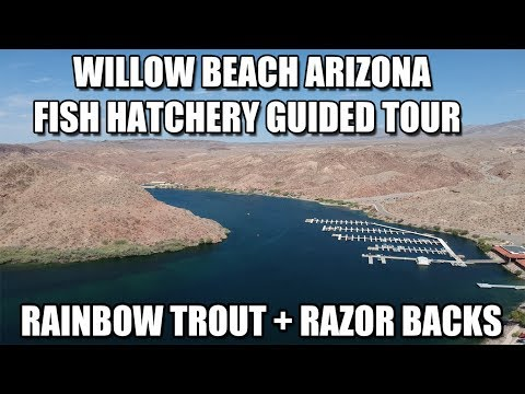 Willow Beach Fish Hatchery Guided Tour ( Trout And Razor Back Suckers)