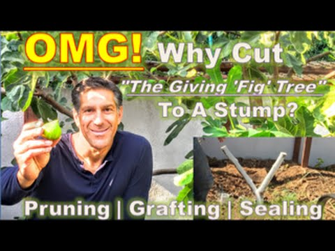 "OMG! Why Cut ""The Giving 'Fig' Tree"" To A Stump? 
