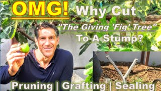 """OMG! Why Cut """"The Giving 'Fig' Tree"""" To A Stump? 