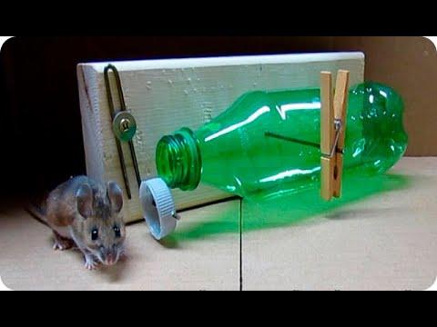 La mejor trampa para ratones que puedes hacer la - Trampas para cazar ratas ...