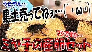 クワガタ&カブトムシ☆昆虫採集2017 ミヤマクワガタの産卵セット組んで...