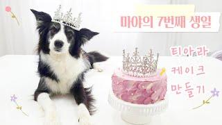 보더콜리 마야의 7번째 생일파티 ♡ 강아지 티아라 케이크 만들기