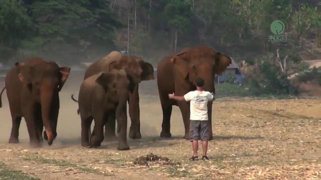 просто невероятно! слоны приходят на зов человека... их позвали