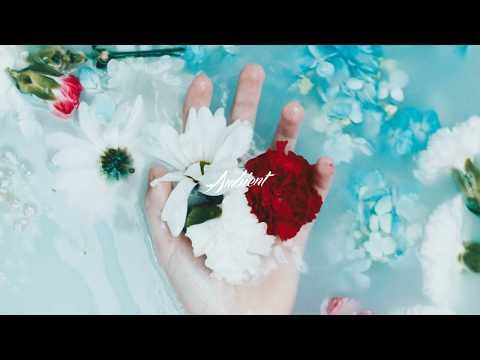 Lights & Motion - Bloom
