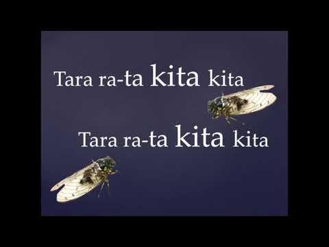 A Te Tarakihi
