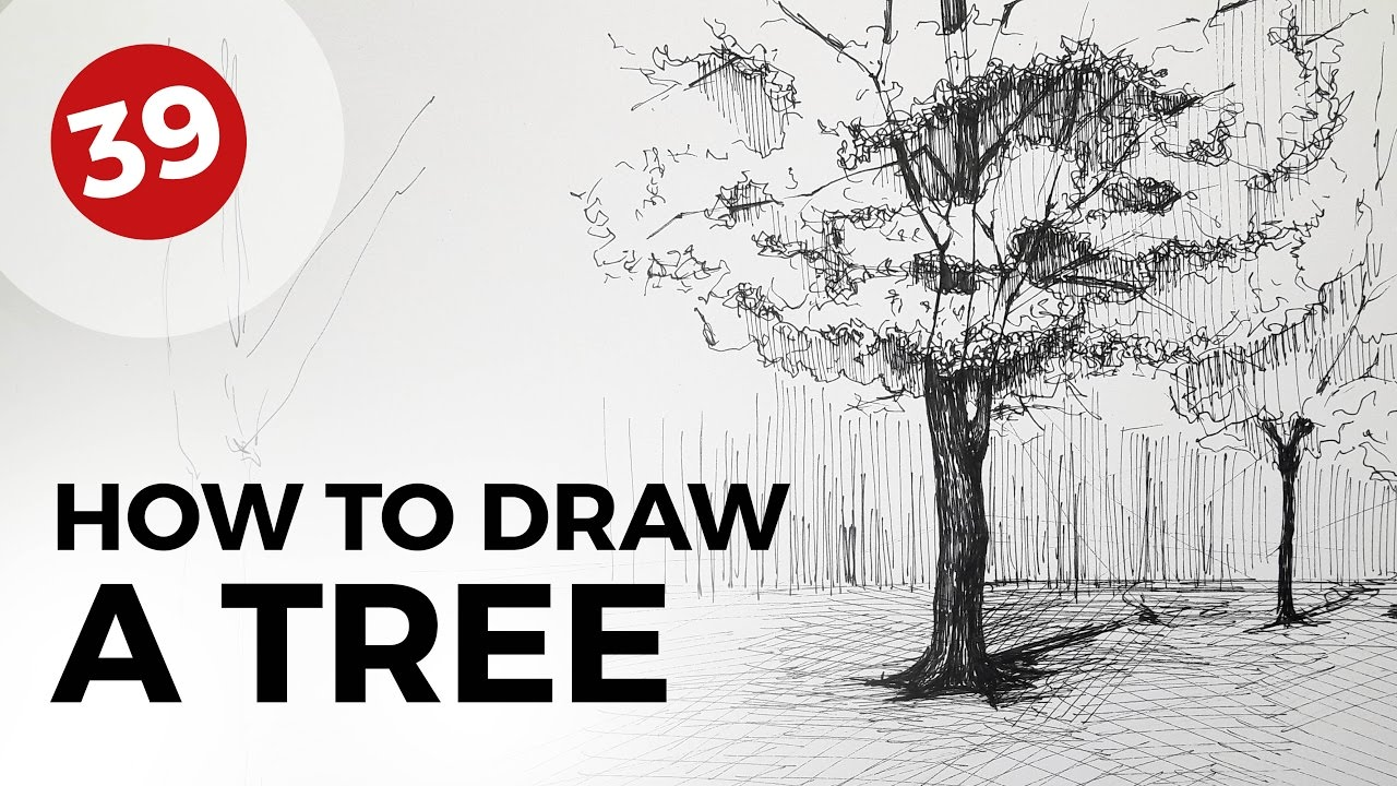 How To Draw A Tree Daily Architecture Sketches 39 Youtube