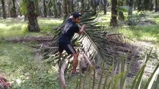 Anak rantau lombok timur