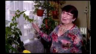 Уход за комнатными цветами в зимний период(Несколько полезных советов по уходу за комнатными цветами в зимний период от программы