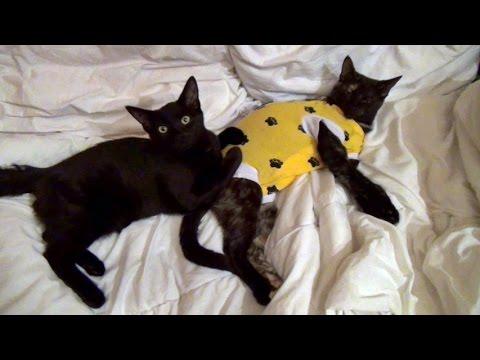 Blackberrie & Sabine - Foster Kittens Vlog #5