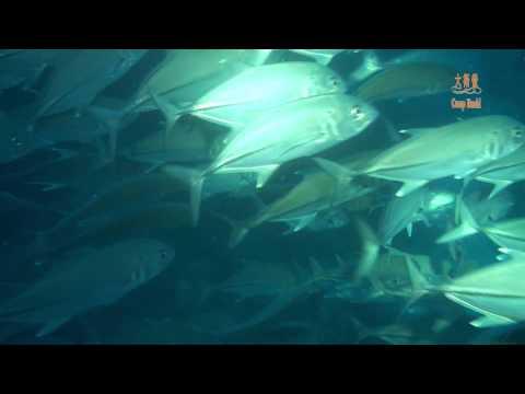 20141215菲律賓BOHOL潛水旅遊