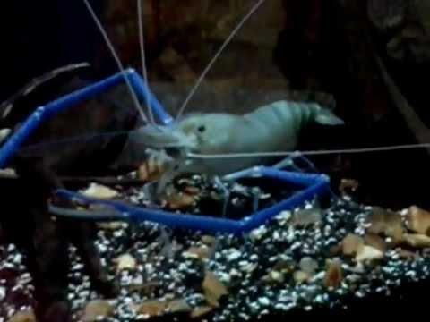 Tulsa Oklahoma Aquarium! IT'S LOADS OF FUN! - YouTube