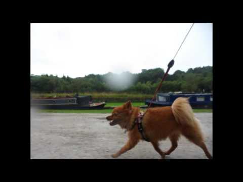 Daisy's Canal adventure.
