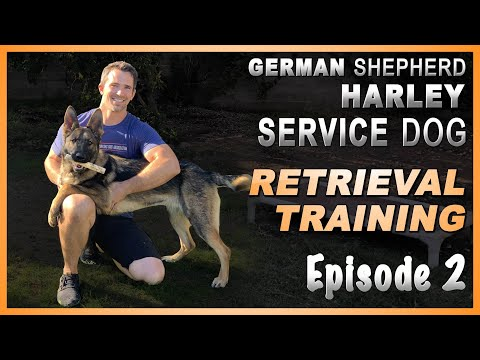 first-steps-to-teach-your-service-dog-a-retrieve.-episode-2