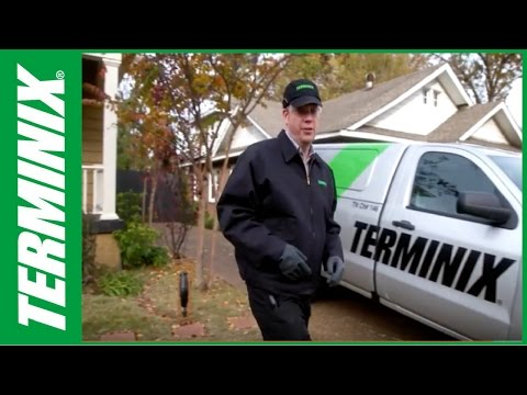 Protect Home From Termites -  Termite Insights - Terminix
