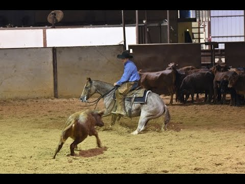 I NEVER WOOD -  2012 Red Roan Mare For Sale /2015 NCHA Futurity Prospect