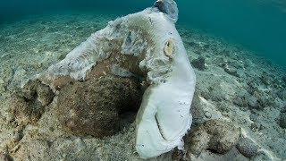 11 Marine Animals the World is Killing Quickly!