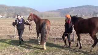 Equi- Périgord - reportage -