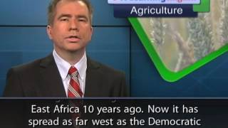 Learn ABBA_Agriculture Cassava Virus Spreads to West Africa
