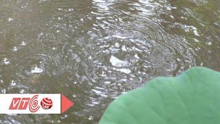 Kỳ bí hồ nước quanh năm sôi ùng ục   VTC