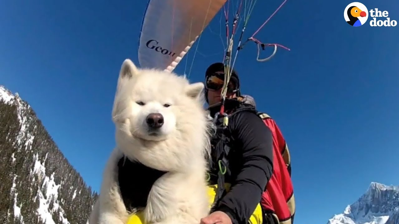 Dog Loves Paragliding With Dad