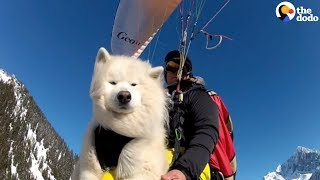 Dog Loves Paragliding With Dad | The Dodo thumbnail