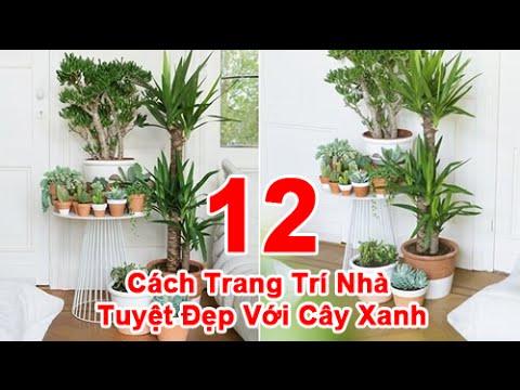 12 Cách Trang Trí Nhà Tuyệt Đẹp với Cây Xanh