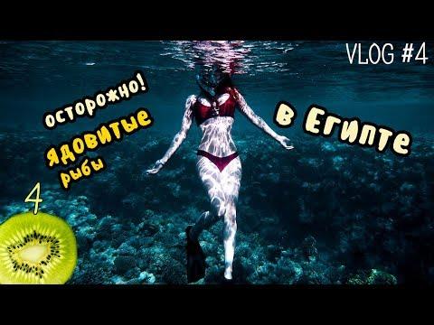как остаться без ноги. ядовитые рыбы в Египте || Vlog 4